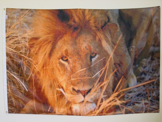 Lion - Digital Print Flag.JPG